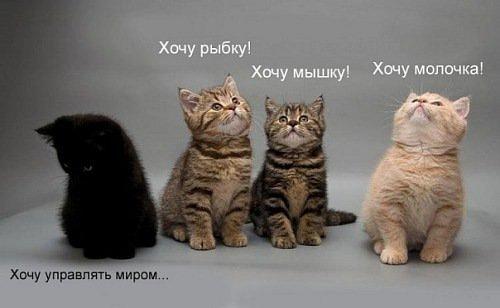 http://cs4361.vkontakte.ru/u2037648/124377535/x_97752be1.jpg
